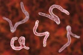 Parazax Complex - contre les parasites - action - avis - pas cher