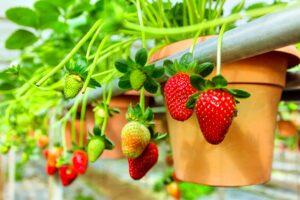 Home Berry Box - France - site officiel - où trouver - commander