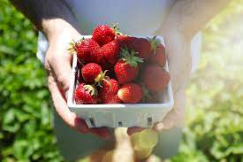 Home Berry Box - temoignage - composition - avis - forum